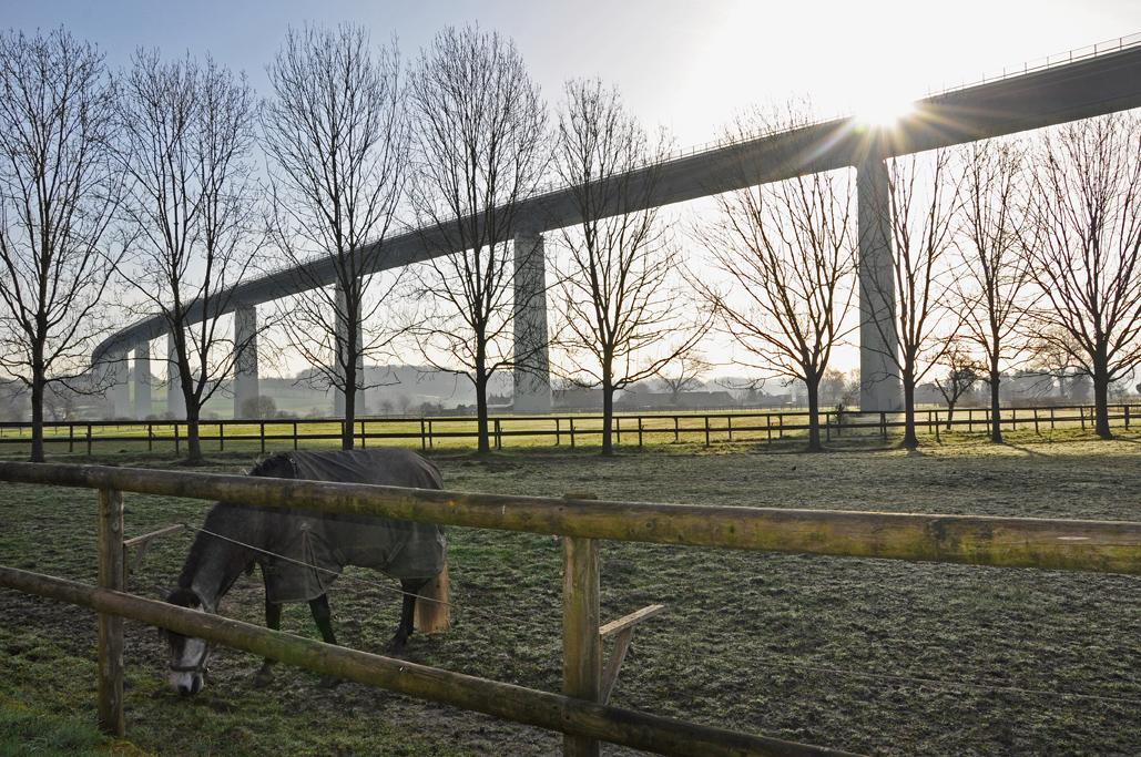 Das Foto zeigt ein grasendes Pferd auf einer Koppel. Im Hintergrund überspannt die Autobahnbrücke der A52 als spektakulärer Blickfang das radrevier.ruhr im Ruhrtal.