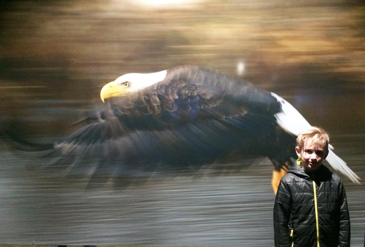"""Das Foto zeigt den Sohn der Blogautorin Heike, der in der Ausstellung """"Wunder der Natur"""" im Gasometer Oberhausen vor dem Foto eines fliegenden Adlers steht."""