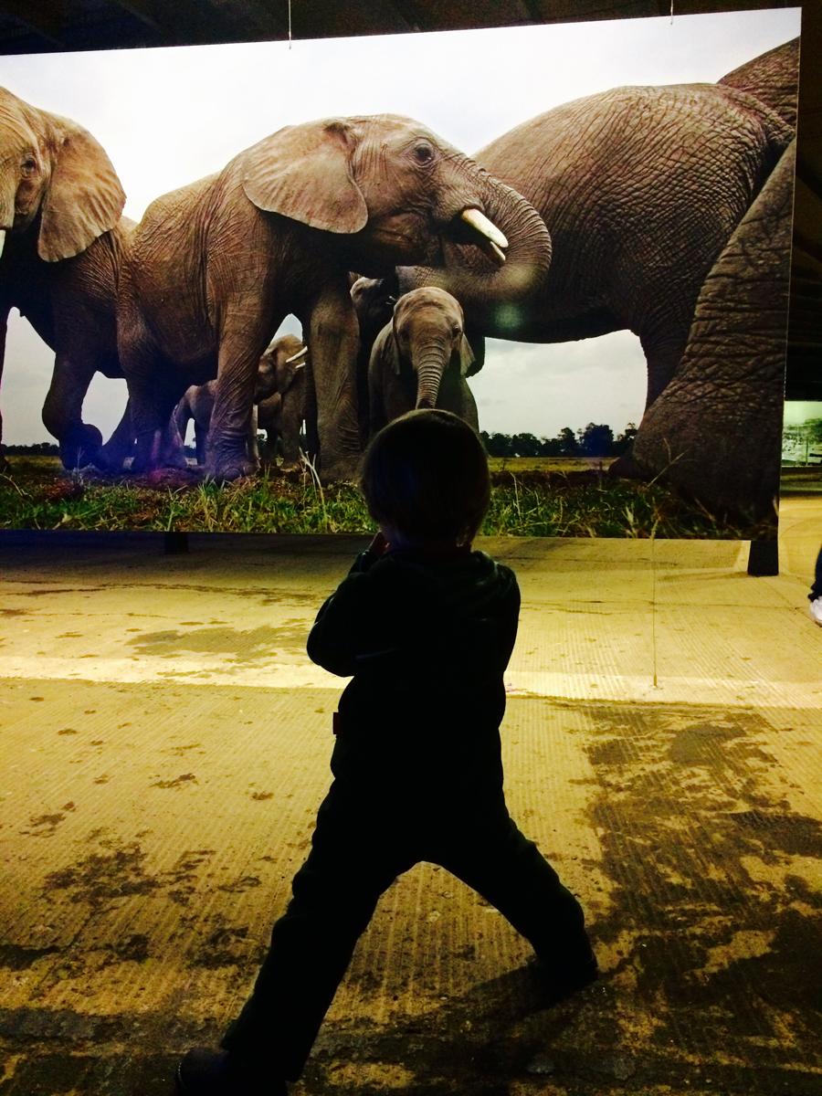 Das Foto zeigt einen kleinen Jungen vor der Fotografie einer Elefantenfamilie