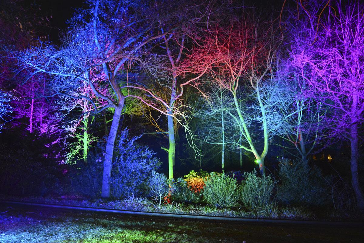 Das Foto zeigt beleuchtete Bäume beim Parkleuchten im Grugapark Essen