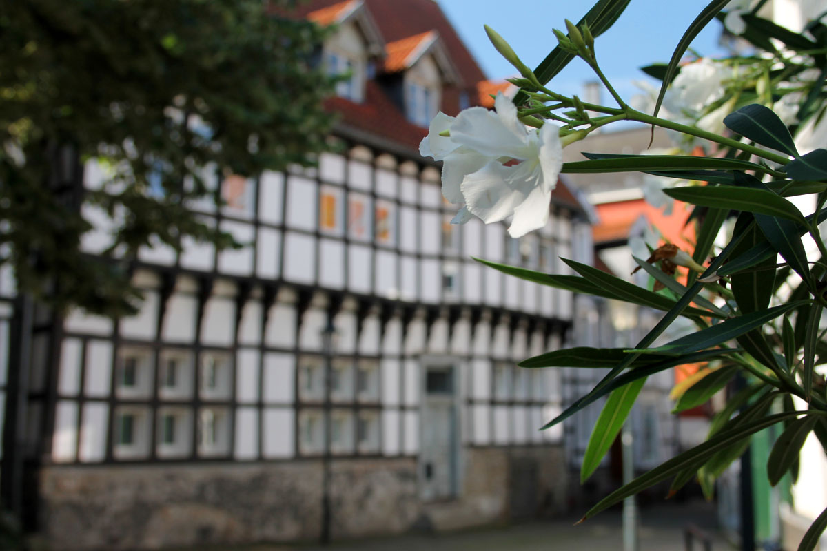 Das Foto zeigt ein Blume und im Hintergrund Fachwerkhäuser