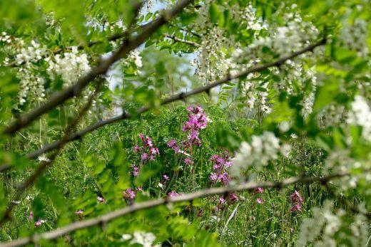 Das Foto zeigt Blumen im Bergpark