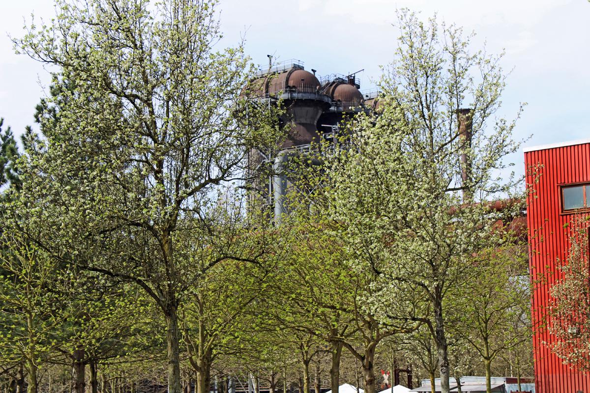 Das Bild zeigt blühende Bäume im Landschaftspark Duisburg-Nord