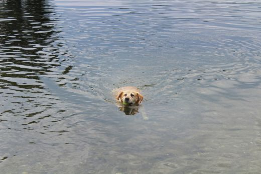 Das Bild zeigt einen Hund im Wasser