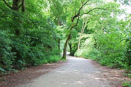 Das Bild zeigt einen Wanderweg an der Sechs-Seen-Platte