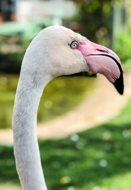 Das Foto zeigt einen Flamingo im Tierpark Bochum