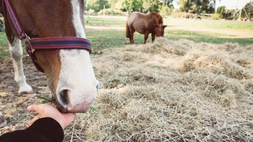 Das Bild zeigt zwei Pferde