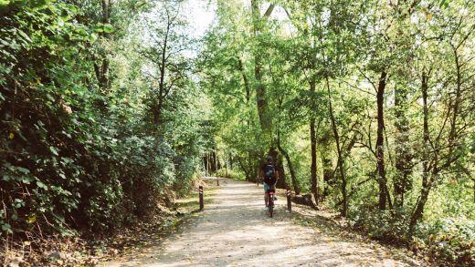 Das Bild zeigt einen Radfahrer im Wald