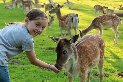 Das Foto zeigt ein Mädchen, das ein Reh im Naturwildpark Granat füttert
