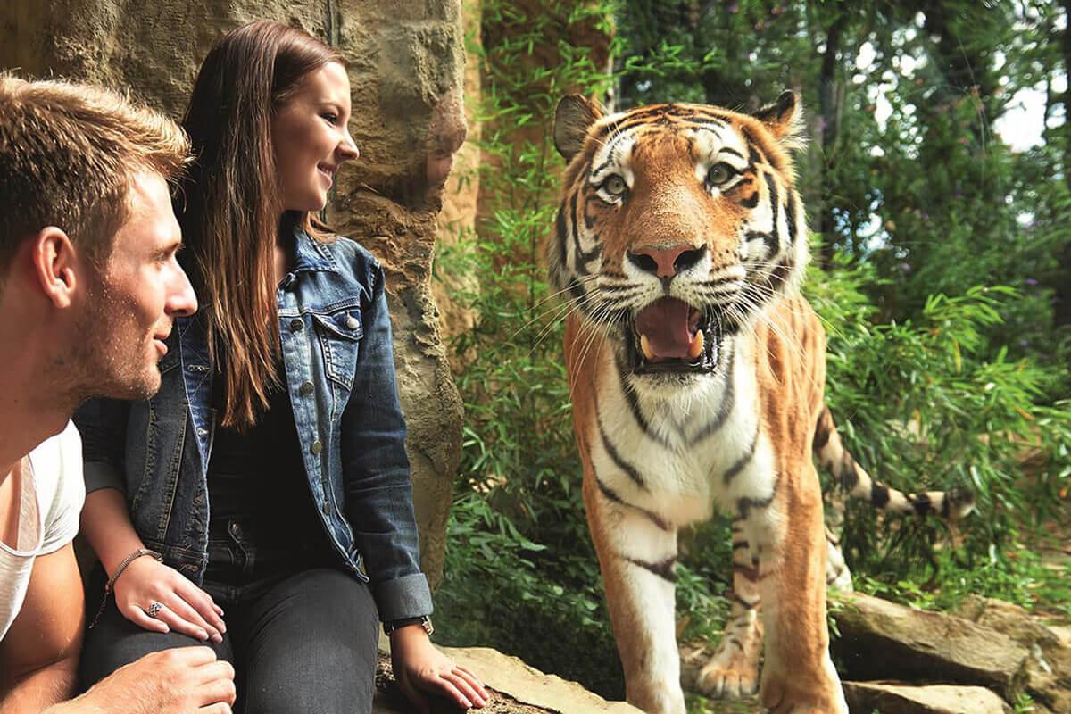 Das Foto zeigt einen Tiger zusammen mit Besuchern der ZOOM Erlebniswelt in Gelsenkirchen