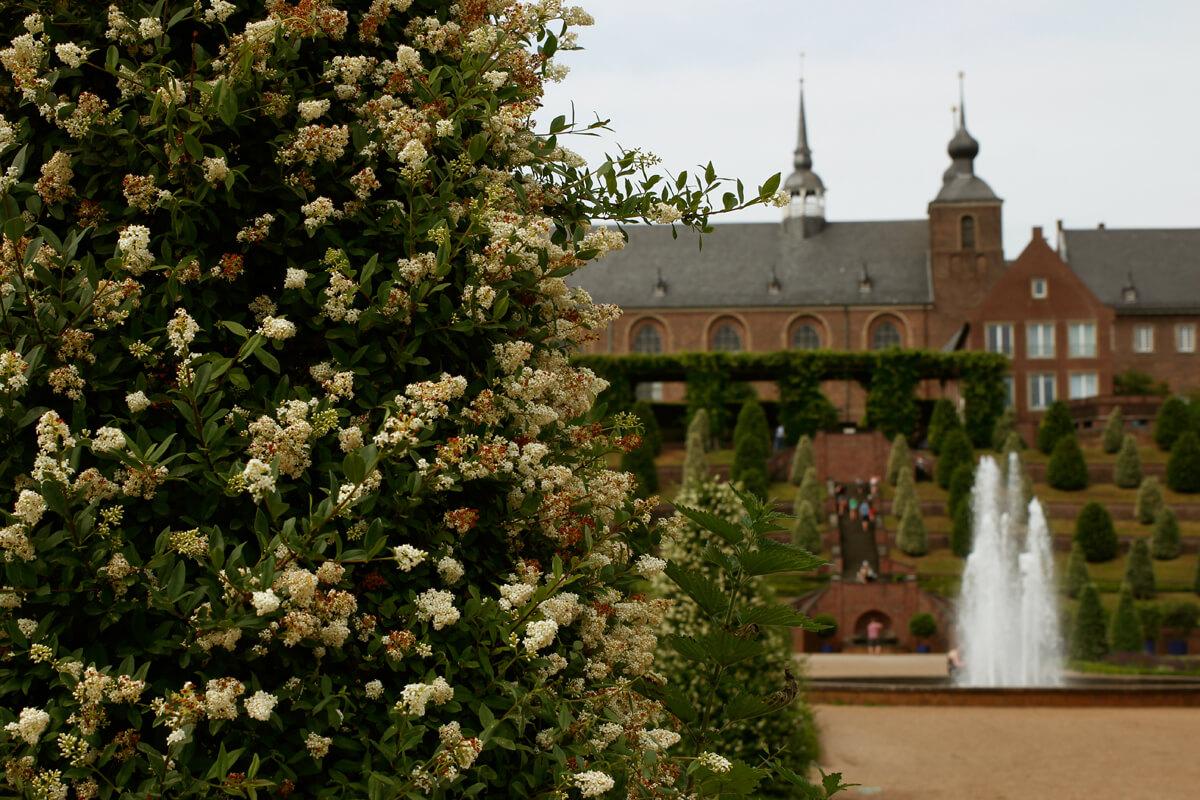 Das Bild zeigt eine Pflanze und im Hintergrund eine Springbrunnen und das Gebäude des Klosters