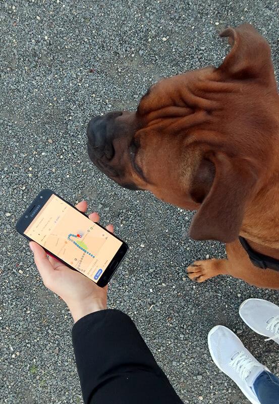 Das Foto zeigt einen Hund beim Geocaching in Dinslaken