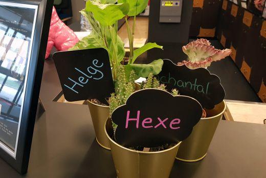 Das Foto zeigt Pflanzen des niu Cobbles in Essen