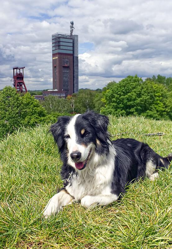 Das Foto zeigt Hund Fino im Nordsternpark Gelsenkirchen, der sich bestens als Ziel für einen Kurzurlaub mit Hund im Ruhrgebiet eignet