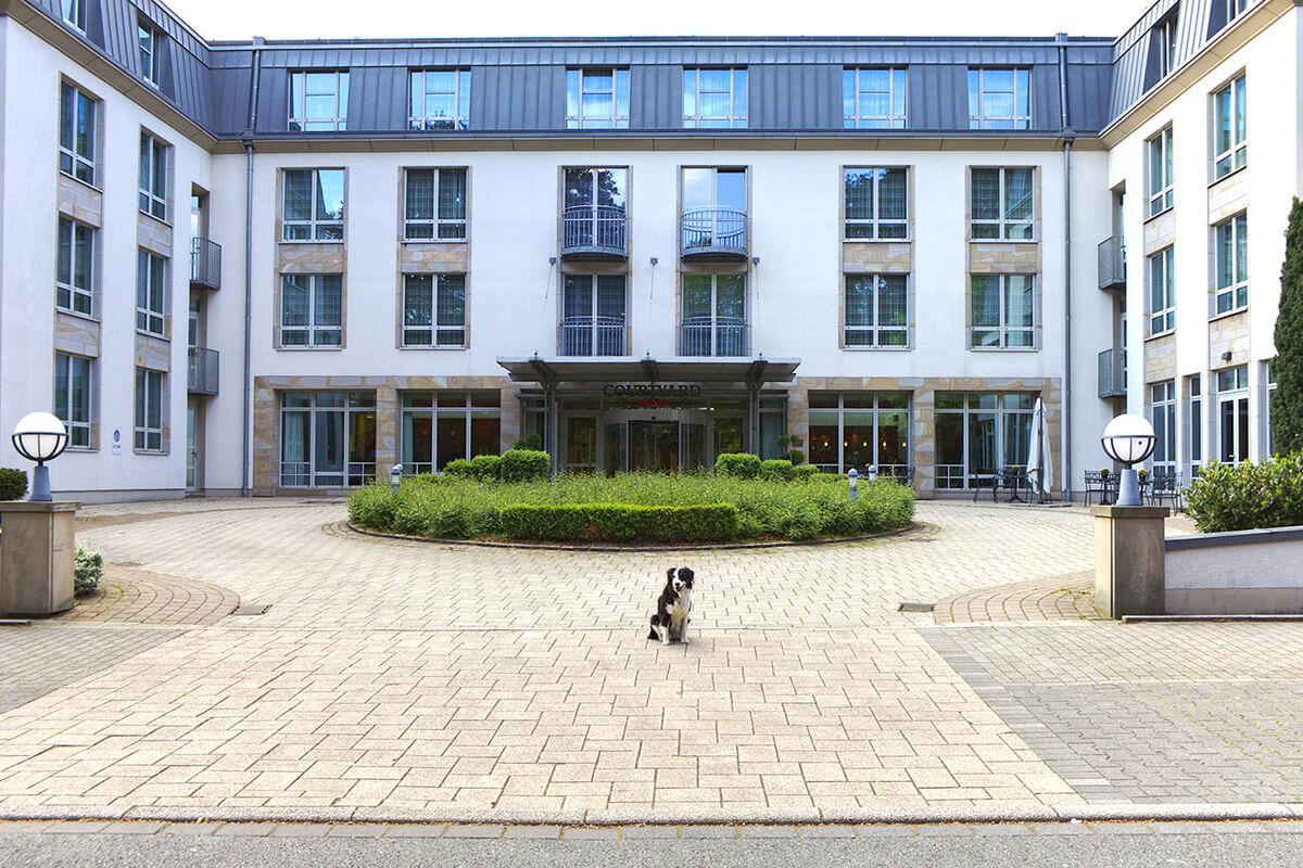 Das Foto zeigt Hund Fino vorm Hotel Courtyard by Marriott am Stadtpark Bochum, das sich bestens für einen Kurzurlaub mit Hund im Ruhrgebiet eignet