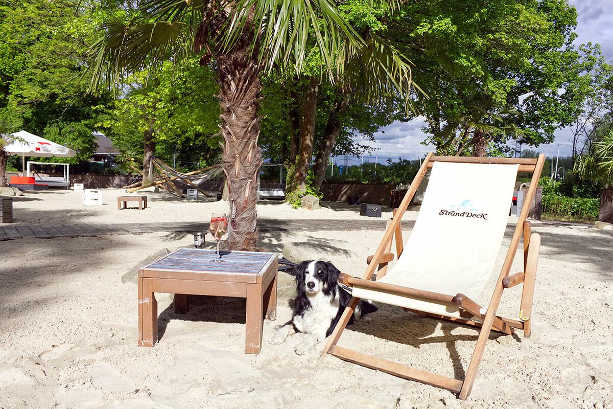 Das Foto zeigt Hund Fino nebst Beeren-Cocktail im StrandDeck am Kemnader See, das sich bestens als Verschnaufpause bei einem Kurzurlaub mit Hund im Ruhrgebiet eignet