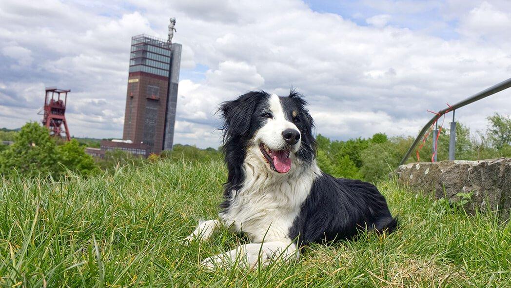 Meine 5 Tipps für einen Kurzurlaub mit Hund im Ruhrgebiet - Mein Ruhrgebiet