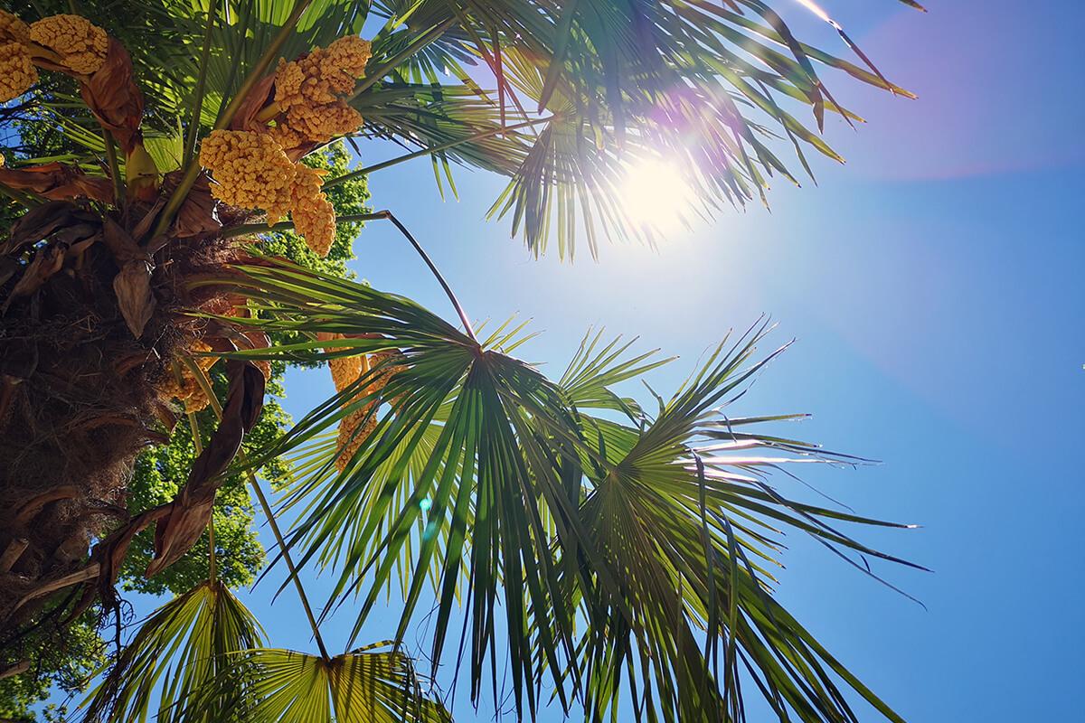 Das Foto zeigt eine Palme im StrandDeck Kemnade am Kemnader See, einem der vielen Beach Clubs im Ruhrgebiet