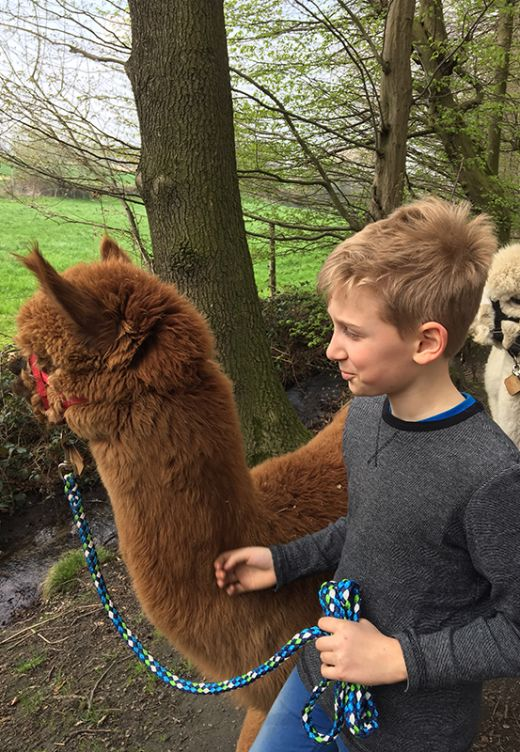 Das Bild zeigt einen Jungen mit Alpaka an der Leine