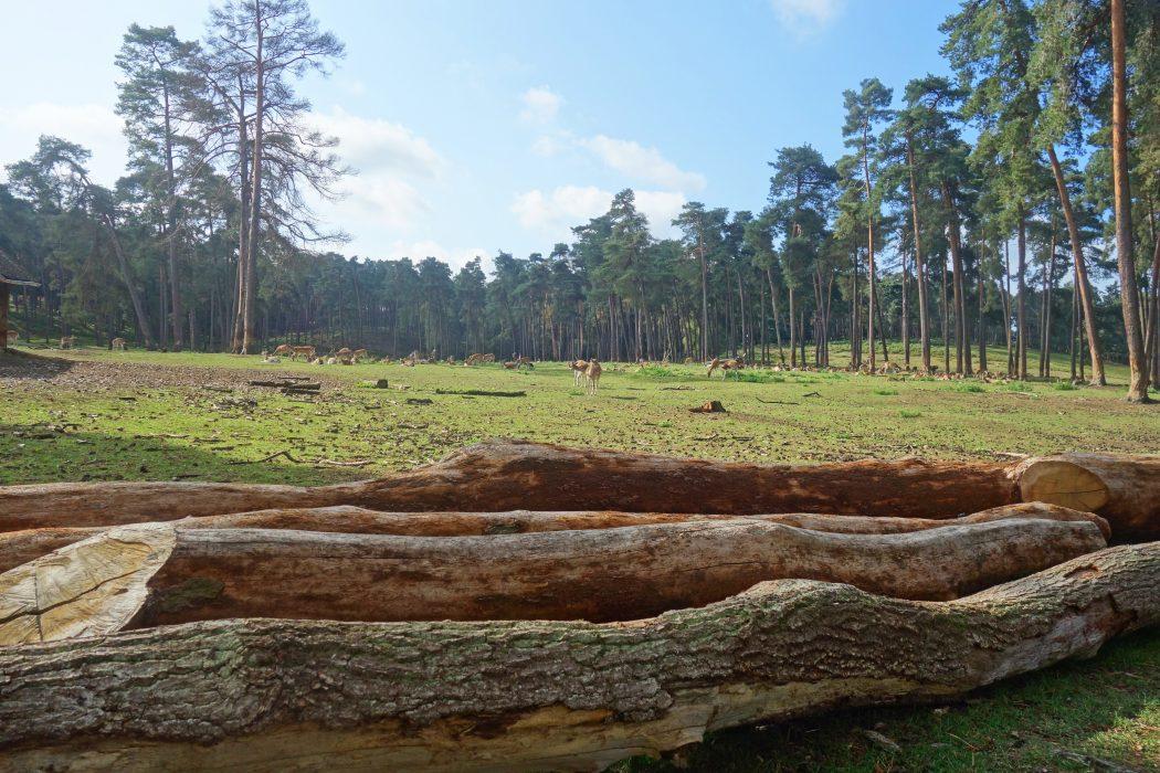 Das Bild zeigt die Landschaft im Wildpark Granat