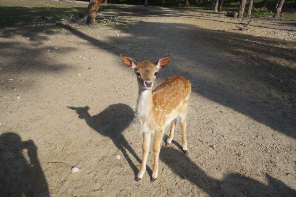 Das Bild zeigt ein Jungtier im Wildpark Granat