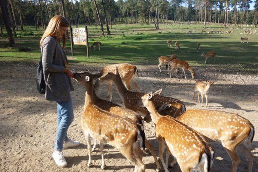 Das Bild zeigt Alex im Wildpark Granat