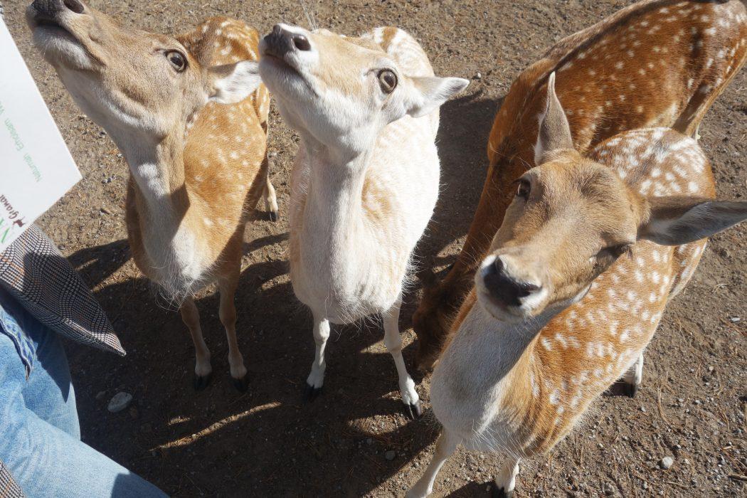 Das Foto zeigt Tiere im Wildpark Granat
