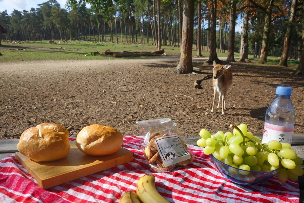 Das Bild zeigt ein Picknick im Wildpark Granat
