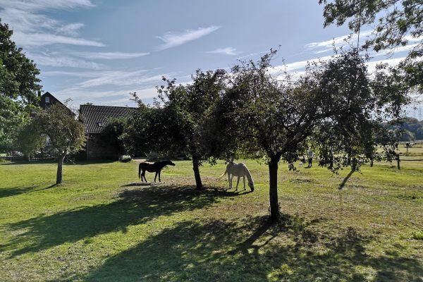 Das Bild zeigt Pferde an der Ruhr