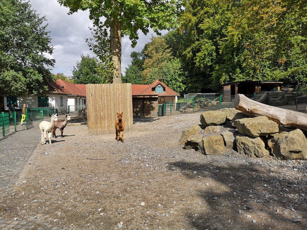 Das Bild zeigt den Streichelzoo im Gysenbergpark in Herne