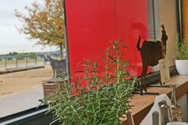 Das Bild zeigt das Ziegenpeter im Rheinpark von innen