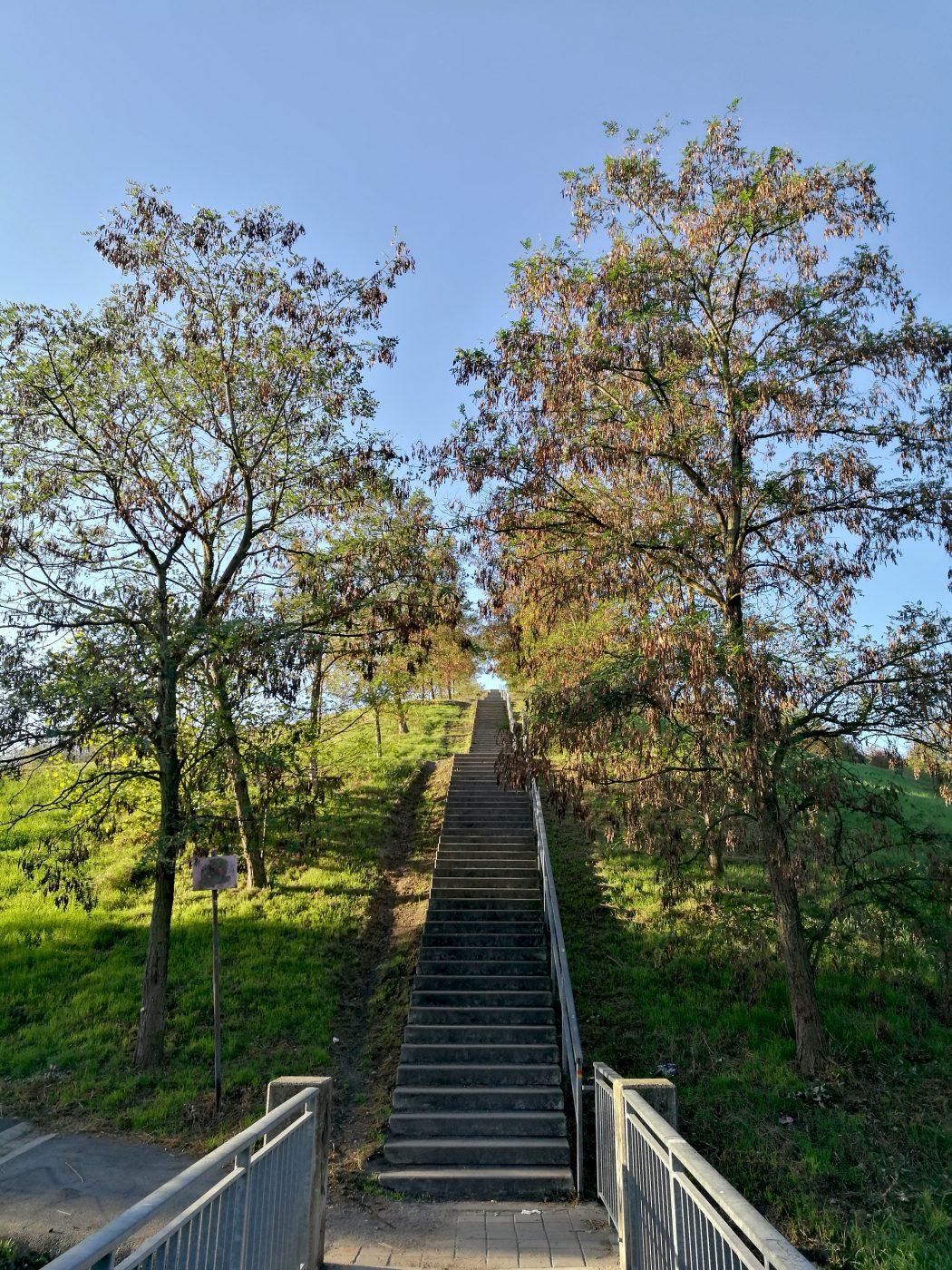 Das Foto zeigt eine Treppe der Halde Rungenberg in Gelsenkirchen