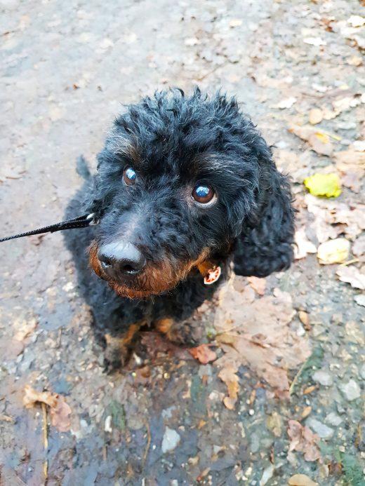 Das Bild zeigt den Hund Sammy
