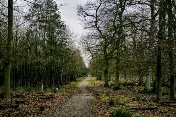 Das Bild zeigt den Diersfordter Wald in Wesel