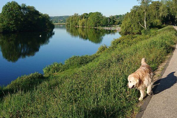 Das Foto zeigt Christins Hund Amigo an der Ruhr