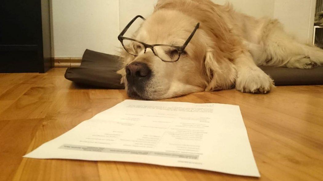 Das Foto zeigt Hund Amigo bei der Arbeit