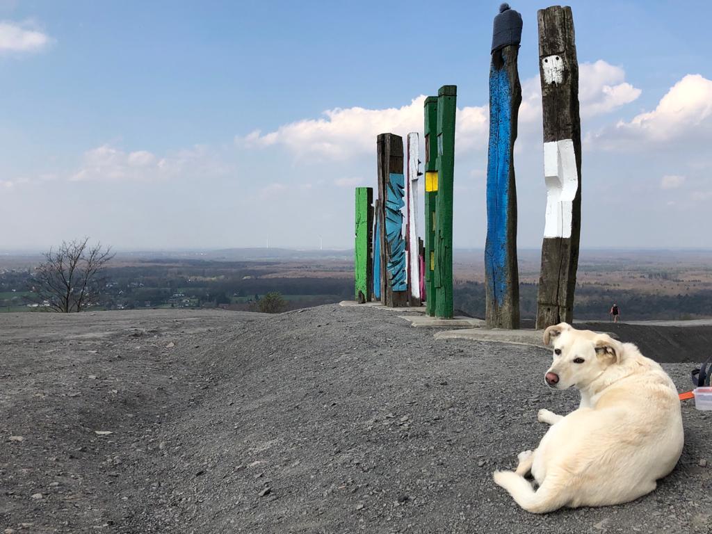 Das Foto zeigt einen Hund auf der Halde Haniel in Bottrop