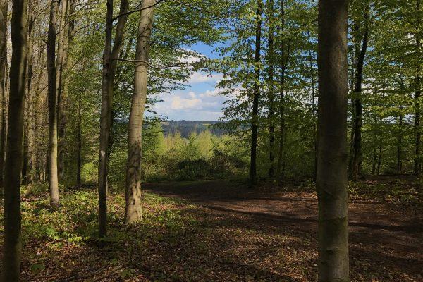 Das Bild zeigt einen Wald in Essen Kettwig