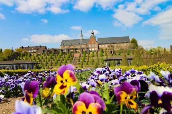 Das Bild zeigt Blumen im Klostergarten des Kloster Kamps