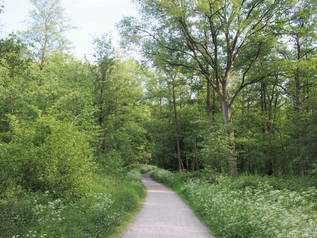 Waldweg im Ruhrgebiet