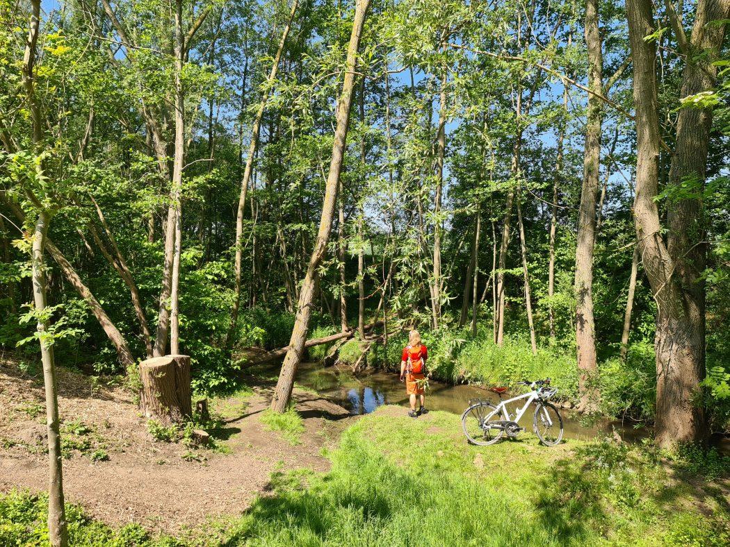 DAs Bild zeigt das Naturschutzgebiet Alte Körne