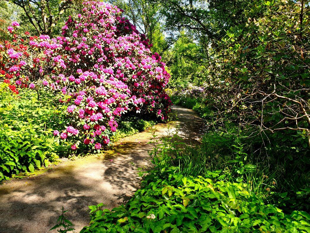 Das Bild zeigt Blumen im Rombergpark Dortmund.