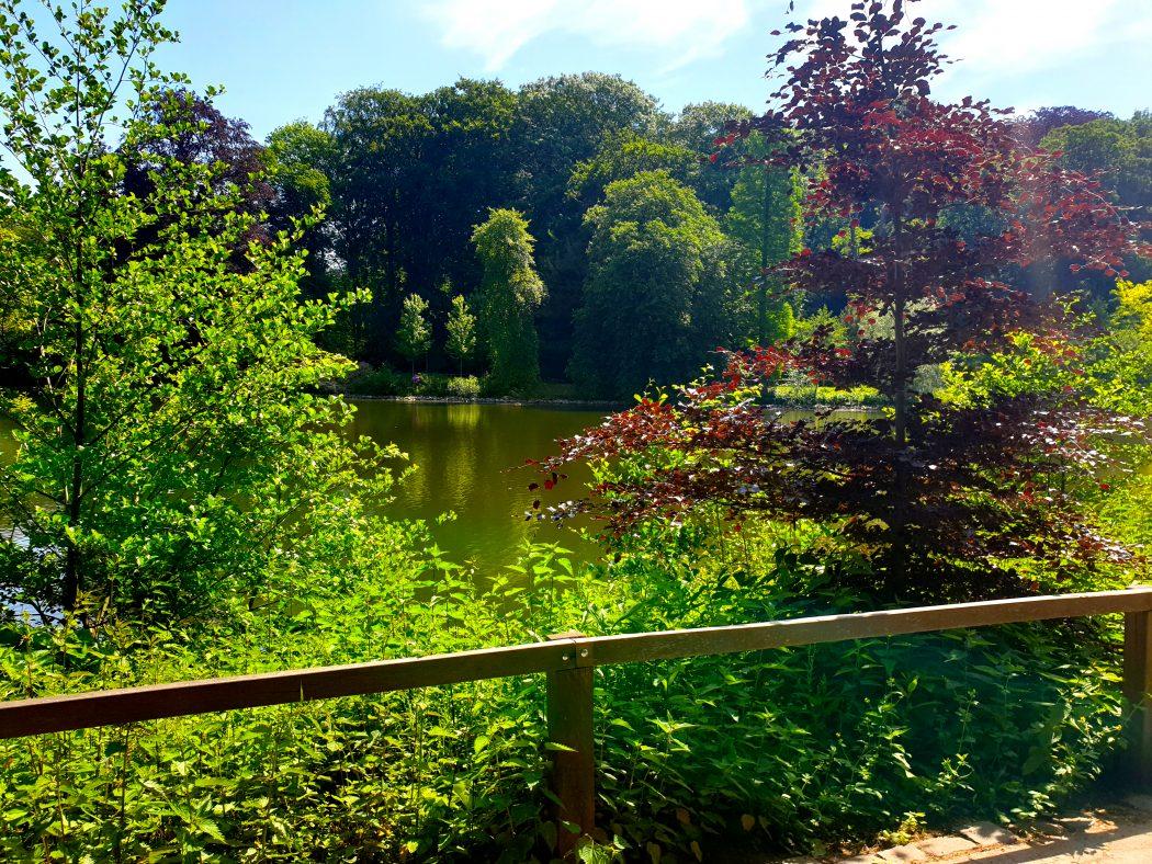 Das Bild zeigt den Teich im Rombergpark