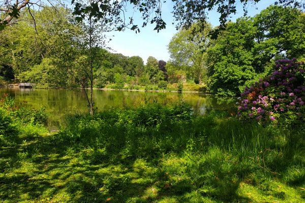 Das Bild zeigt den Teich im Rombergpark Dortmund