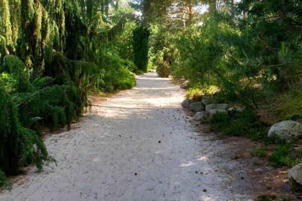 Das Bild zeigt die Moorlandschaft im Rombergpark Dortmund