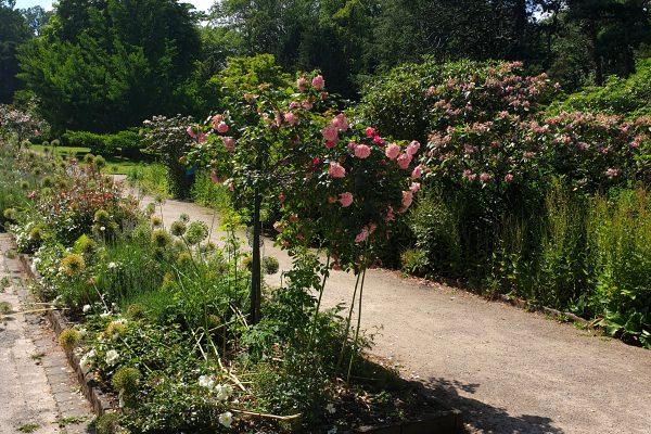 Das Bild zeigt Pflanzen im Rombergpark Dortmund