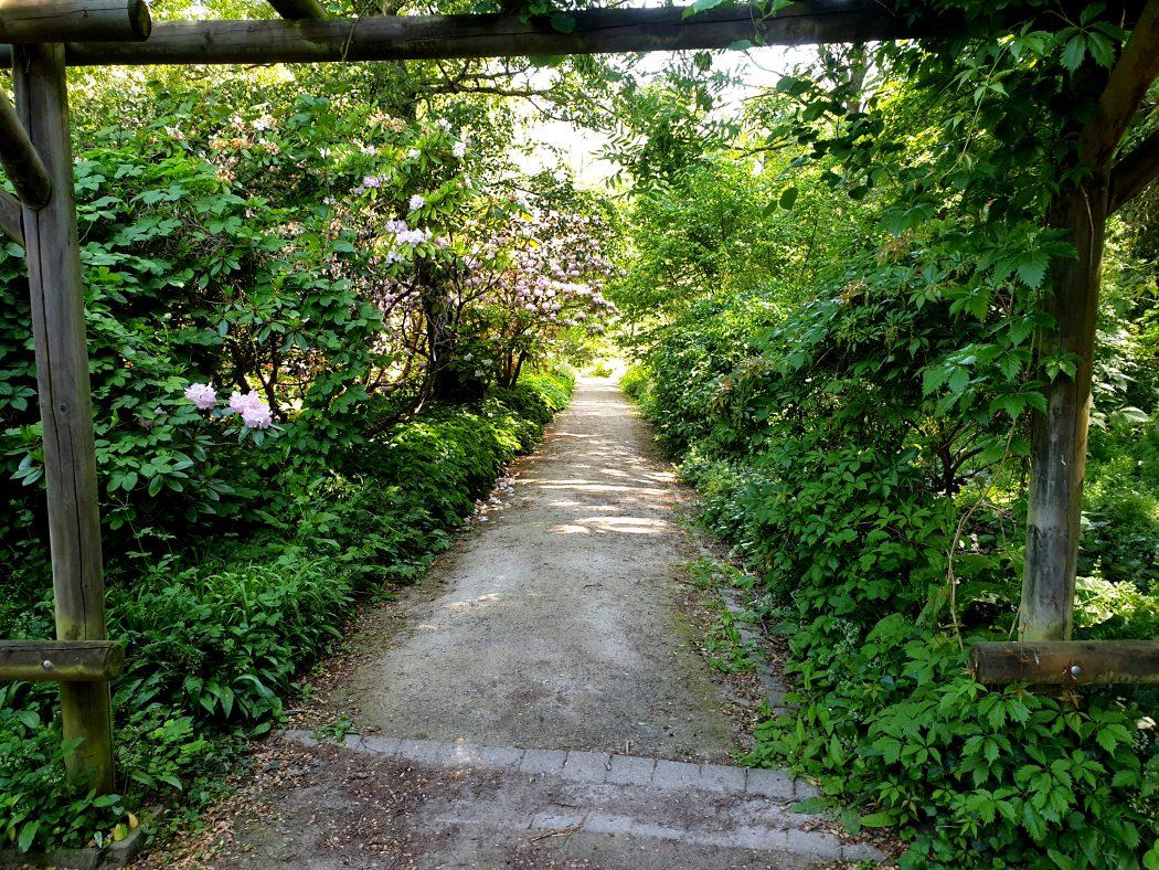 Das Bild zeigt einen grünen Weg im Rombergpark Dortmund