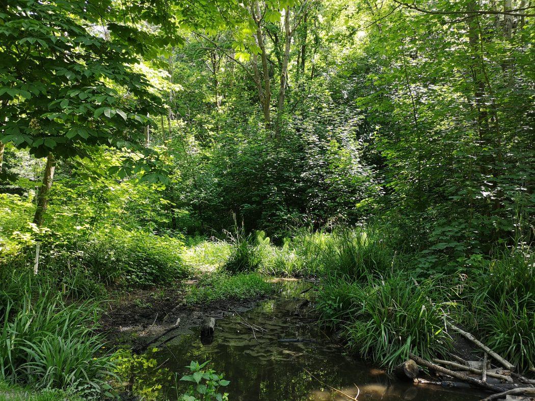 Das Bild zeigt das Naturschutzgebiet Tippelsberg