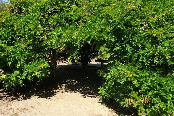 Das Bild zeigt einen Baum im Rombergpark Dortmund