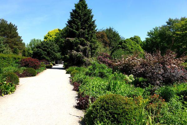 Das Bild zeigt einen Weg im Rombergpark Dortmund